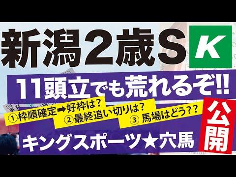 新潟2歳S 2020 【予想】枠は?調教は?「イチオシ馬」をトコトン掘り下げる!